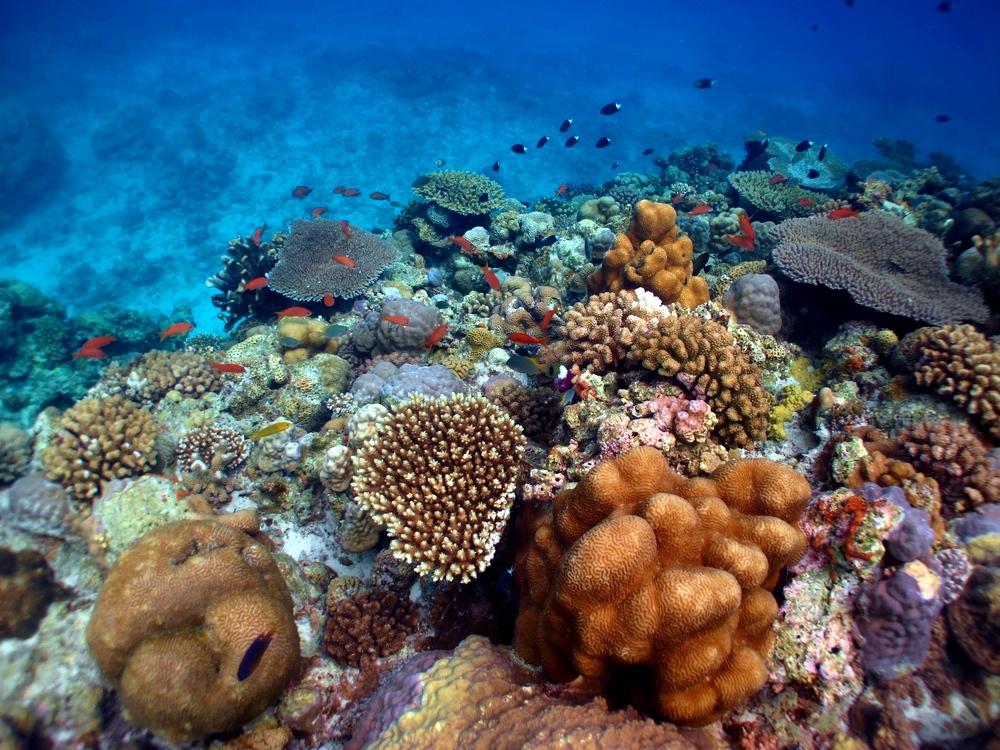 水納島 浅瀬の珊瑚