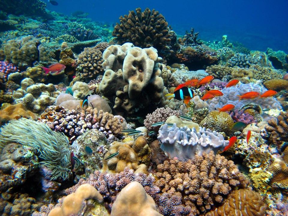 珊瑚礁の魚達