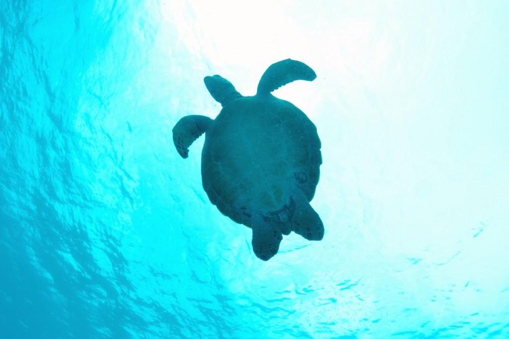 水納島 海ガメのシルエット