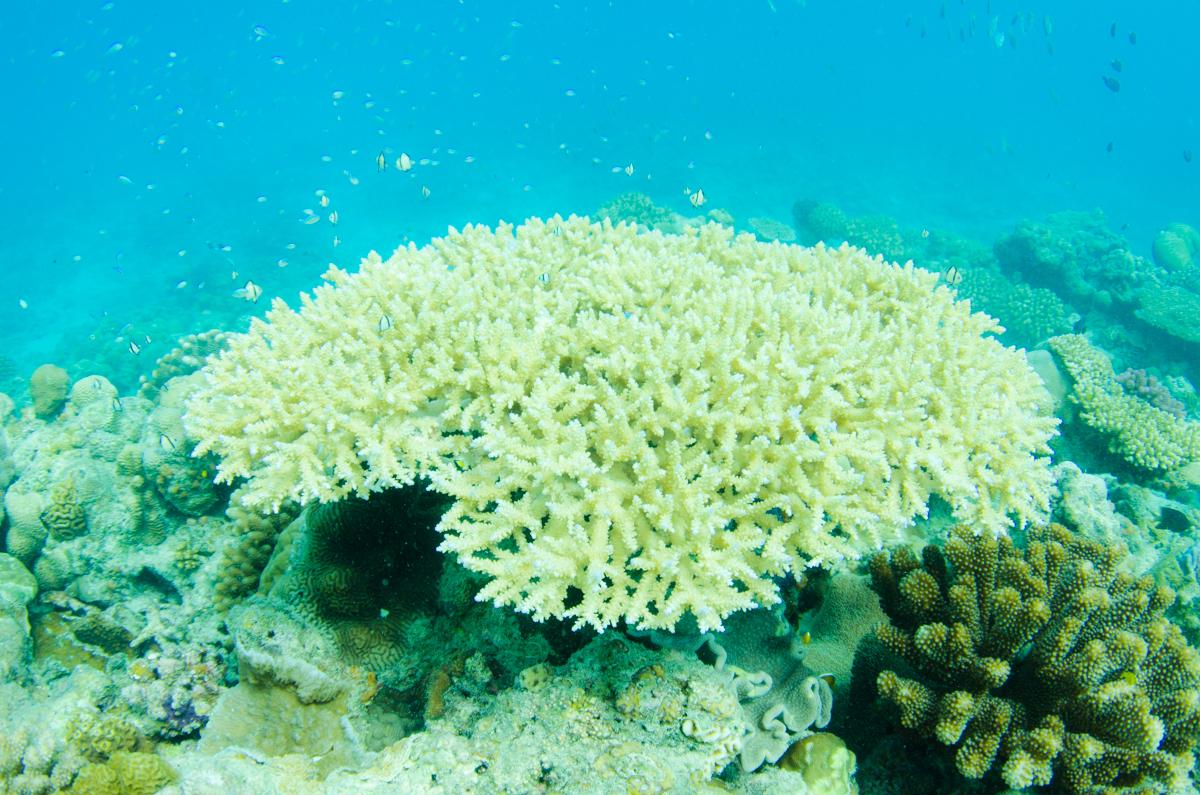 水納島 珊瑚礁とスズメダイ