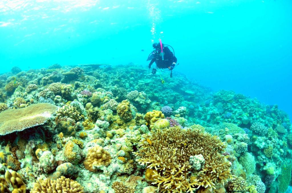 水納島の珊瑚礁とダイバー