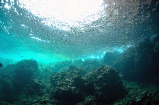 青の洞窟と魚の群れ