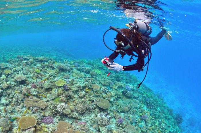 水納島の美しい珊瑚礁とダイバー