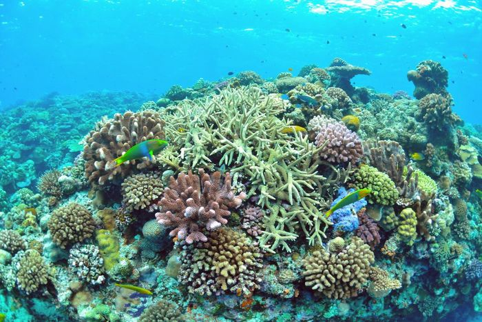 沖縄で最も美しい水納島の珊瑚礁