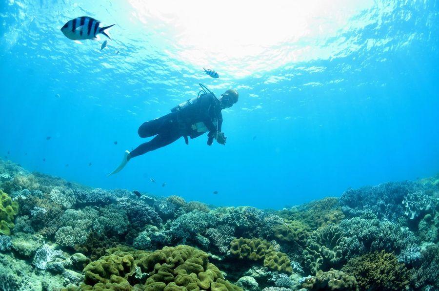 VahoE・バホイ 沖縄 珊瑚礁の群生