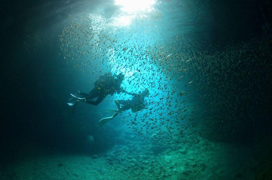 青の洞窟 ハタンポの孵化