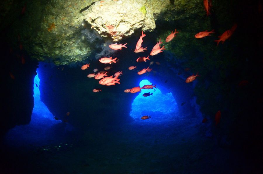 伊江島 オホバの大洞窟の魚達
