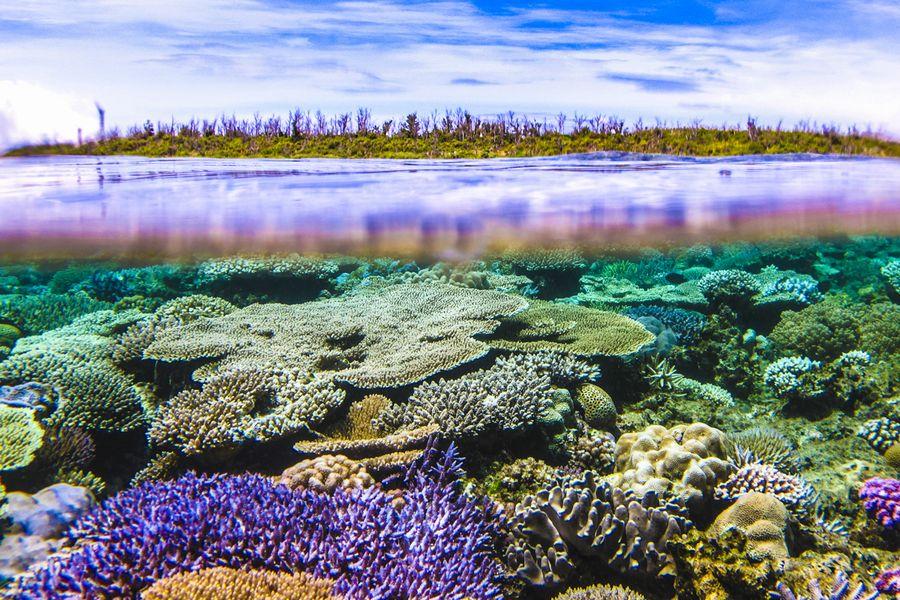 水納島の珊瑚礁 半水面