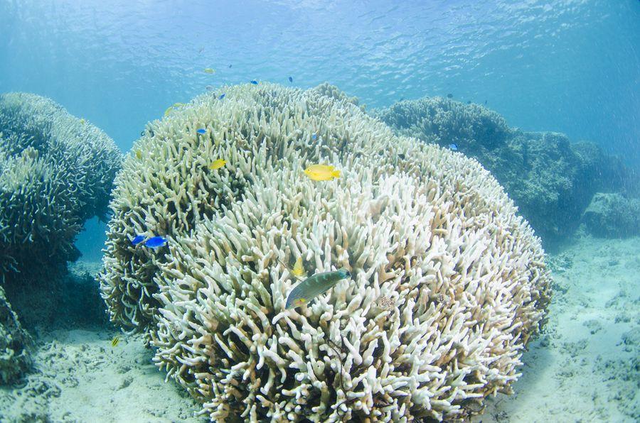 沖縄北部 珊瑚礁の白化現象1