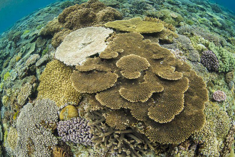 沖縄で1番綺麗な珊瑚礁の群生 水納島②