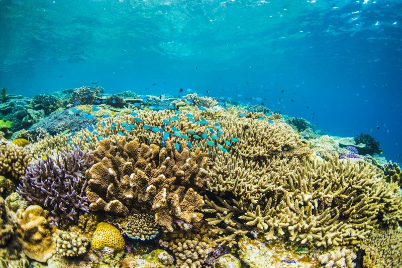 沖縄で1番綺麗な珊瑚礁の群生 水納島 フジテレビ – さまぁ~ずの神ギ問 提供