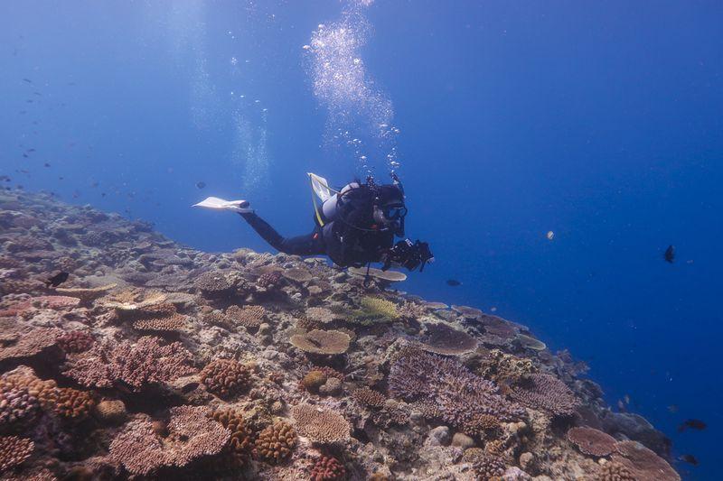 水中カメラマンと珊瑚礁の群生