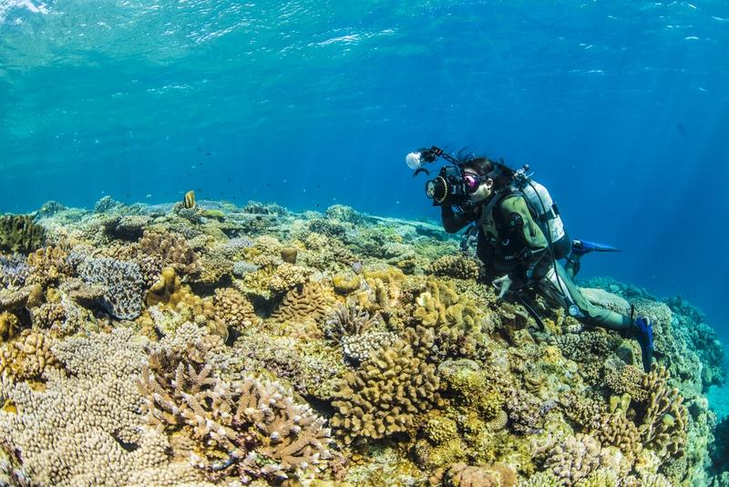 水納島の珊瑚礁に生息する魚を撮影するダイバー