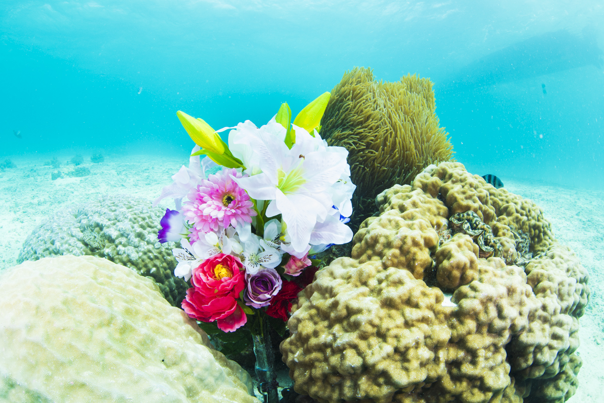 造花とイソギンチャク・水中プロポーズ