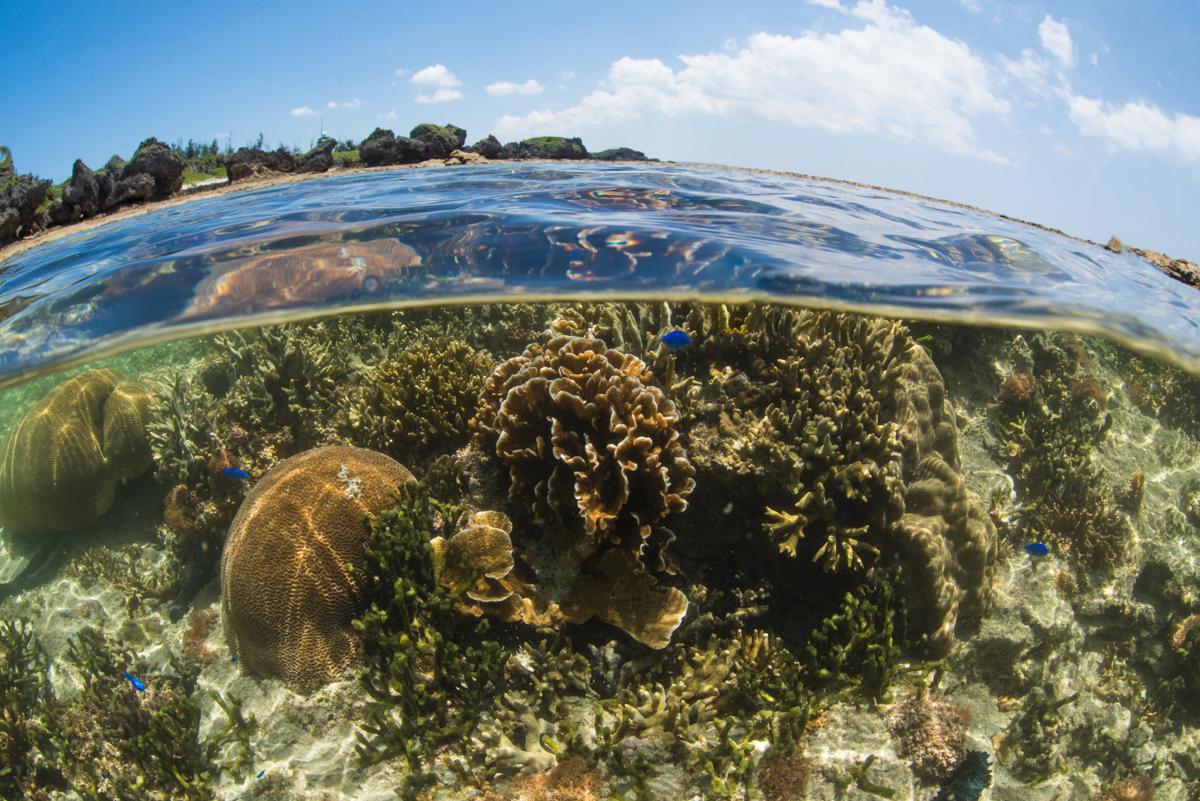 珊瑚礁の半水面写真②