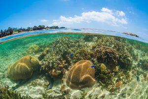 珊瑚礁の半水面写真①