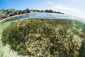 珊瑚礁の半水面写真③