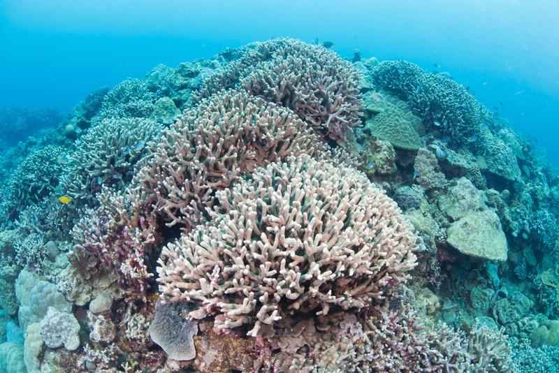 古宇利島・ハートロック沖の珊瑚礁