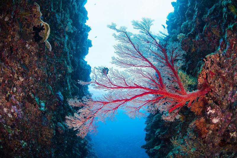 伊江島キャニオンのイソバナ