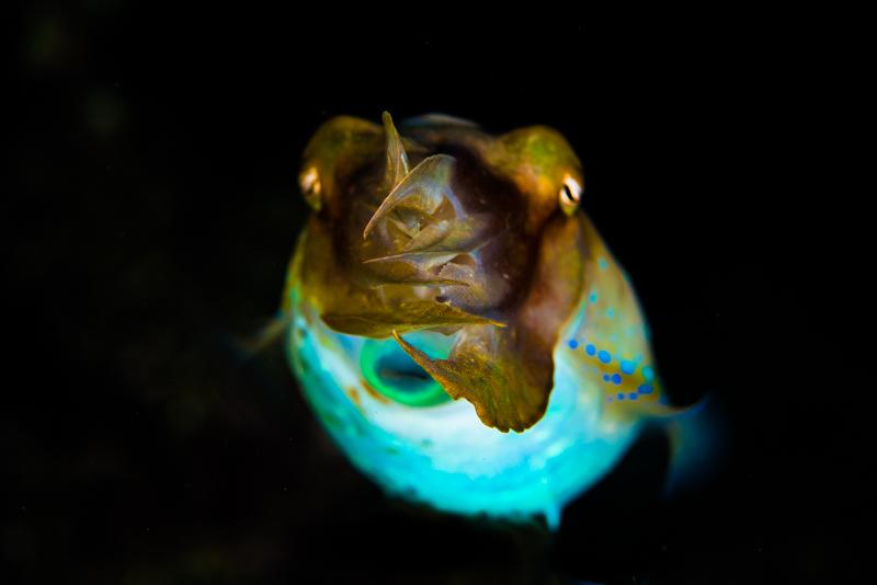 コブシメのピンボケ写真