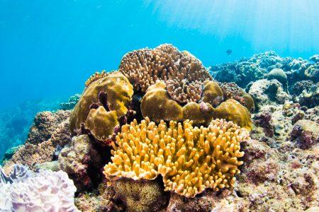 北谷町・砂辺カリフォルニアサイドの珊瑚礁
