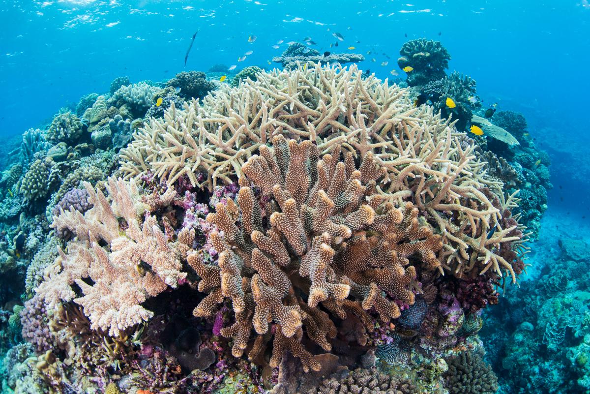 沖縄トップクラスの珊瑚礁の群生 水納島