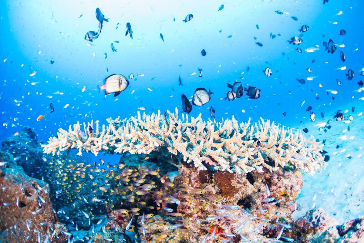 水納島の珊瑚礁とバラエティ豊かな魚達