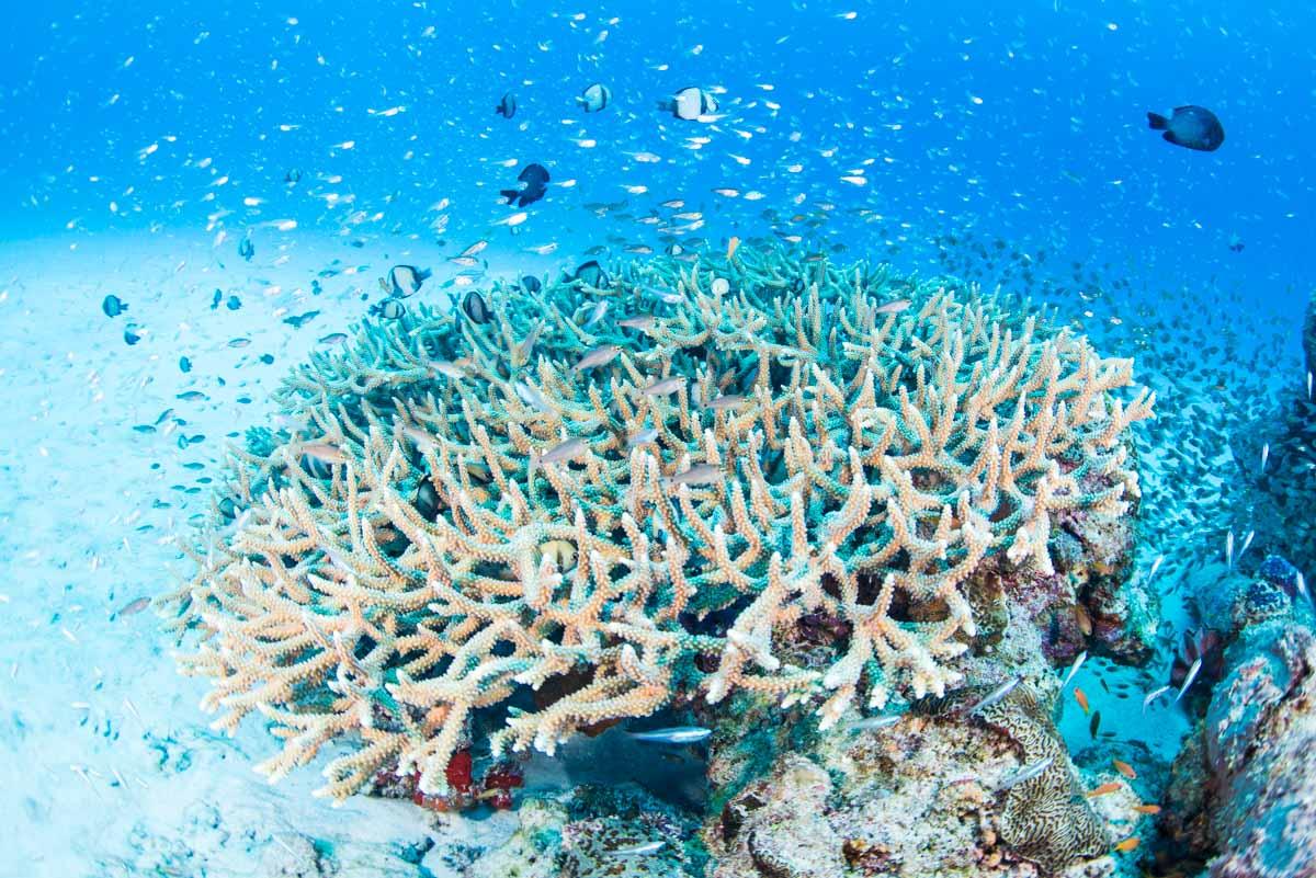 水納島の珊瑚礁と魚達