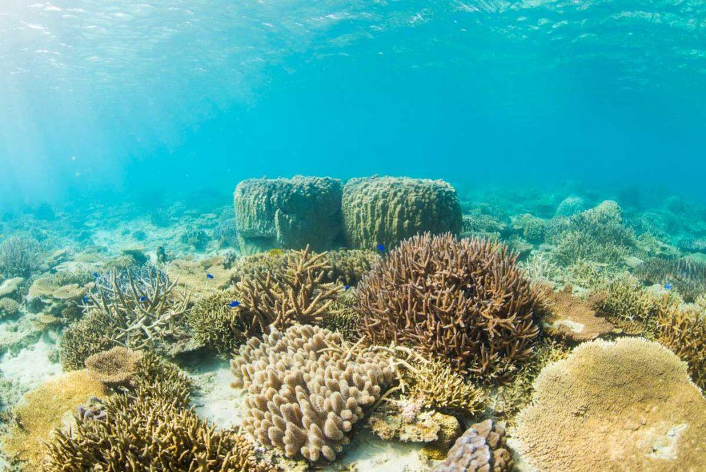 ゴリラチョップの浅瀬の珊瑚礁