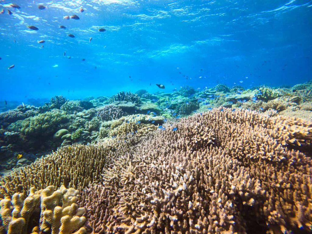 Gopro hero9の水中撮影・浅瀬の珊瑚③