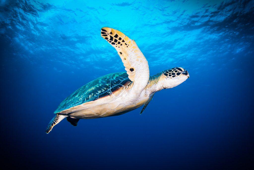 シークレットスポットの海亀