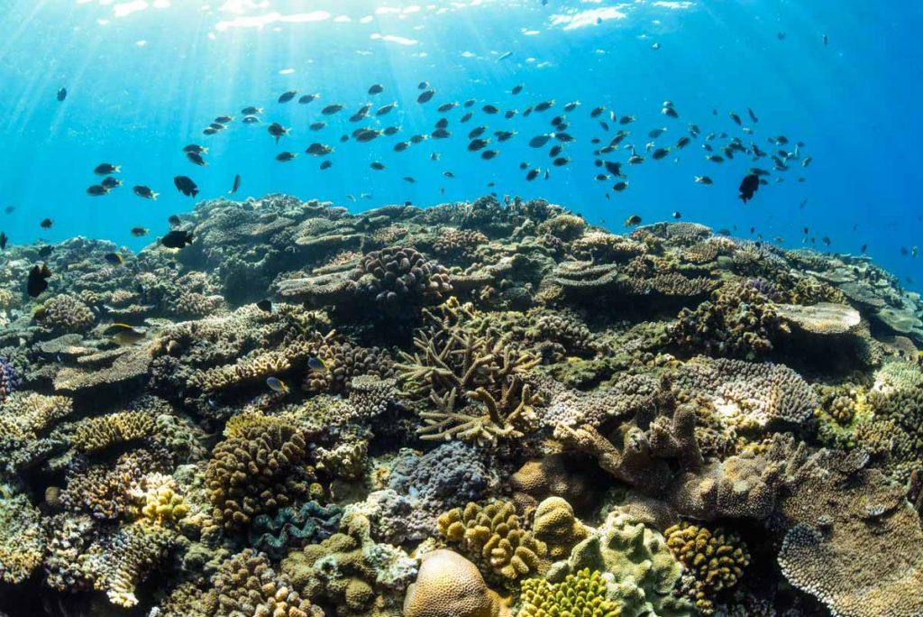 ミニドリームホールの珊瑚