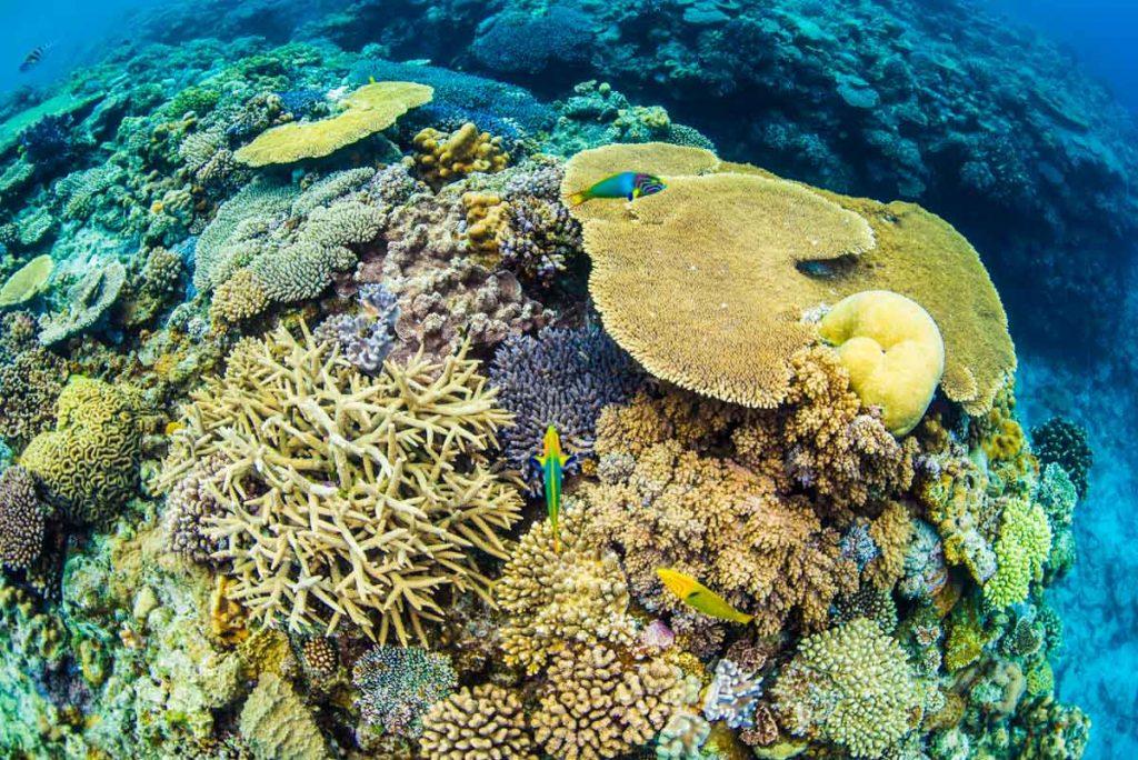 水納島・ケーブルの浅瀬の珊瑚①