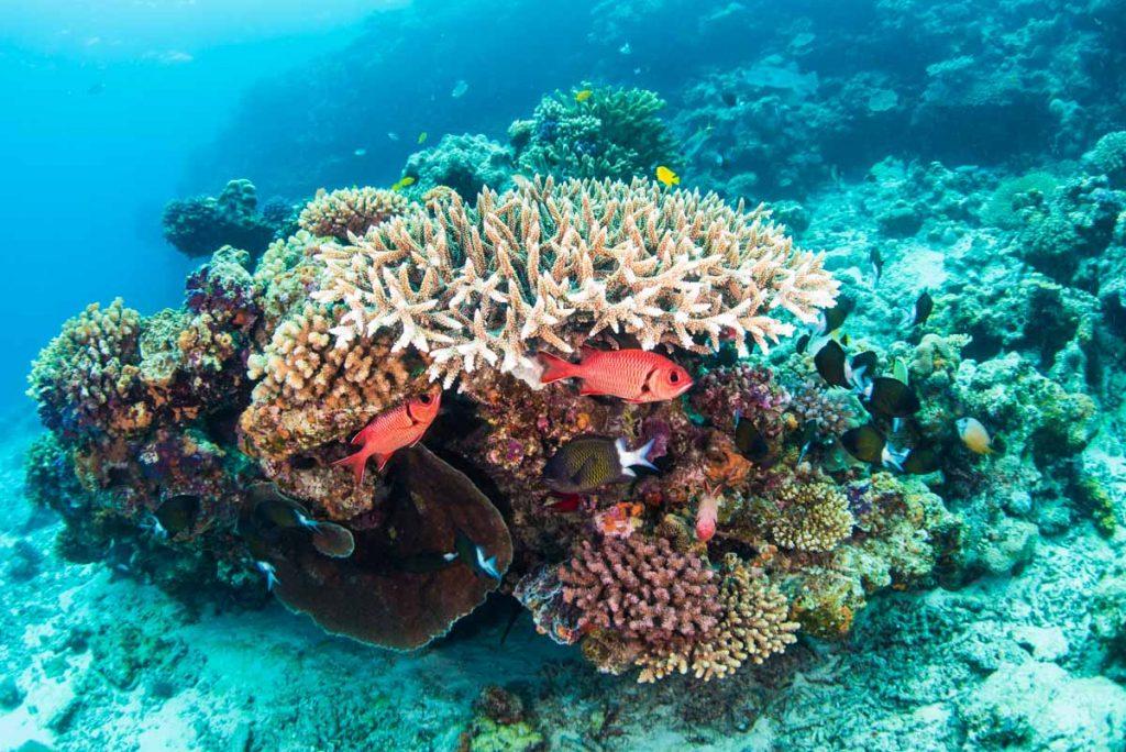水納島・浅瀬の珊瑚とアカマツカサ①