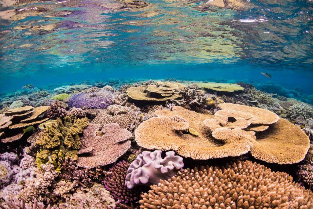 水納島・ケーブルの浅瀬の珊瑚②